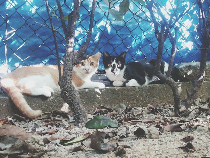 Cat Hong Kong