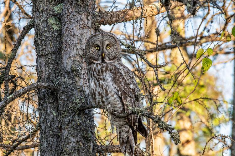 Portrait of a bird on tree