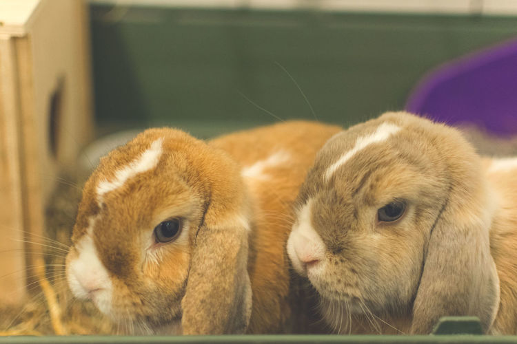 Close-up portrait of cute rabbits in cage