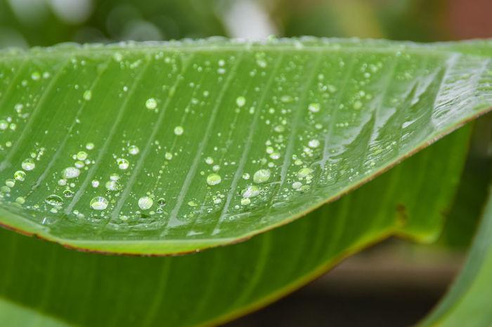 Raindrops RainDrop