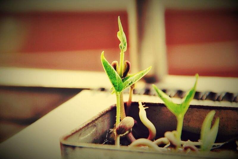 Close-up Growth