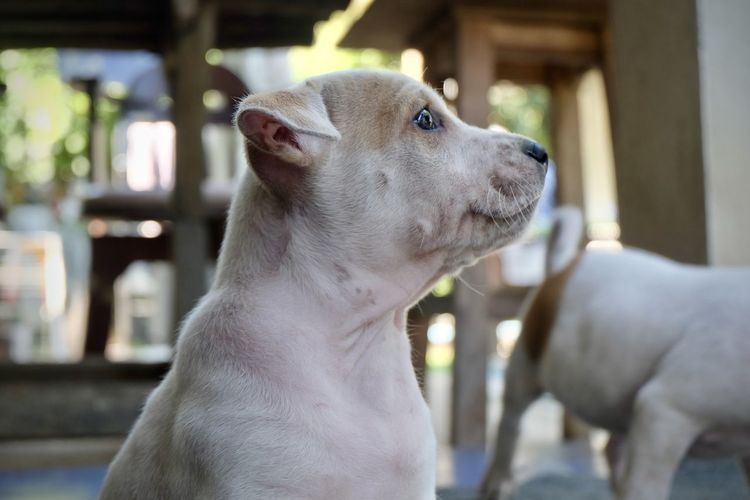 Domestic Pets Mammal Dog Canine Domestic Animals Animal Animal Themes One Animal Vertebrate Focus On Foreground Looking Looking Away Close-up Day No People Indoors  Animal Head