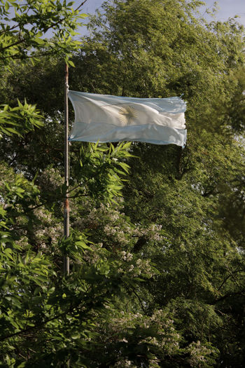 Close-up Day Flag Green Color Low Angle View Nature No People Outdoors Patriotism Tree Wind