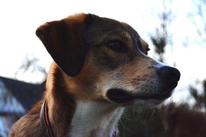 Zeus Dog Pets One Animal Animal Body Part Animal Domestic Animals Nose Outdoors Ear Close-up Doggo