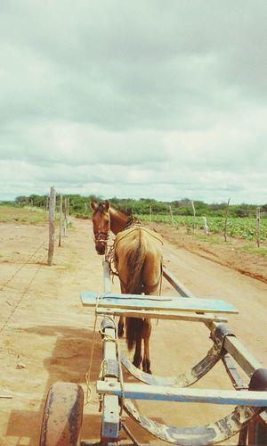 Hi Friend Horse Sky Landscape Working Animal Horse Cart Carriage Pony