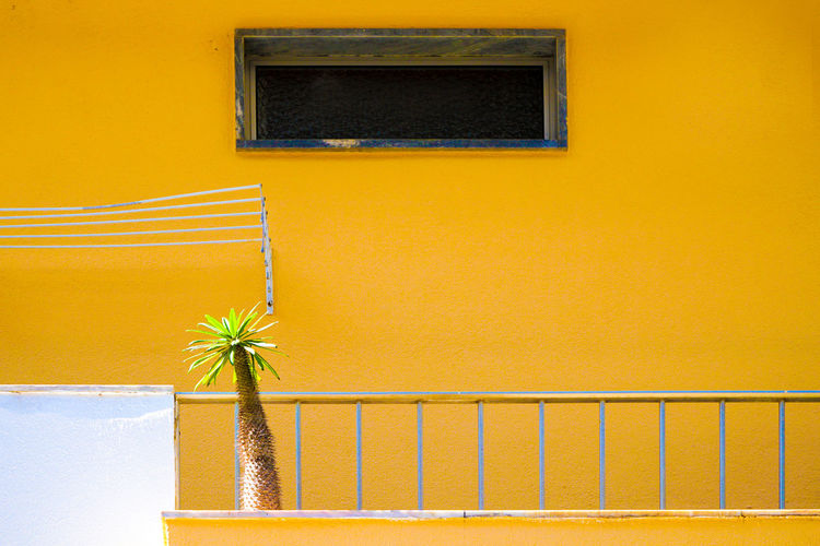 Close-up of yellow window
