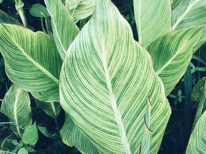 Green Color Leaf Plant Part Growth Beauty In Nature Plant No People Pattern Natural Pattern Close-up Fern Botany Freshness