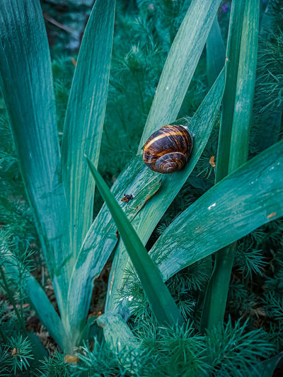 High angle view of snail on leaf