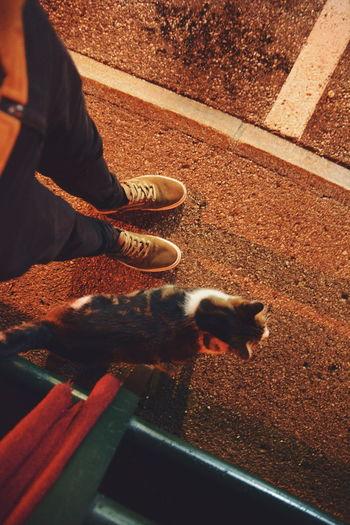 Pets Shoe Human