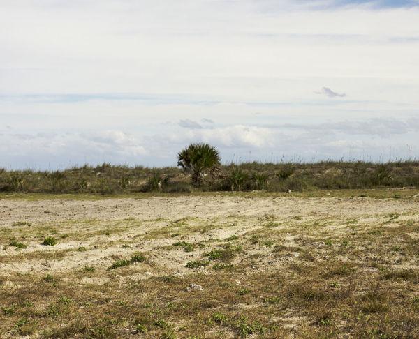 Beach Field Grass Jacksonvillebeach Landscape Remote Tree Vacantlot