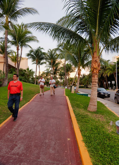 Sidewalk with palm trees between resort, Boulevard Kukulcan, Zona Hotelera, Cancún, Mexico, in September 8, 2018 Cancun Mexico Car Carribean City Day Diminishing Perspective Footpath Full Length Growth Incidental People Leisure Activity Men Motor Vehicle Nature Outdoors Palm Tree People Plant Real People Road Sky Transportation Tree Treelined Tropical Climate