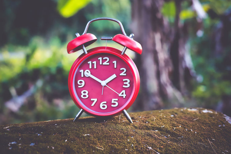 Alarm Clock Alarm Clock Time Clock Number Focus On Foreground Minute Hand Tree No People Clock Face Red Close-up Accuracy Communication Day Shape Wood - Material Outdoors Pink Color Plant Nature Hour Hand