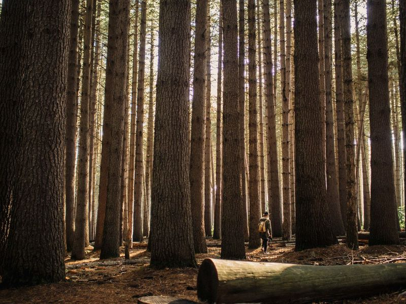 Forest adventures Eyem Best Shots EyeEmBestPics VSCO Market Bestsellers April 2016 Bestsellers