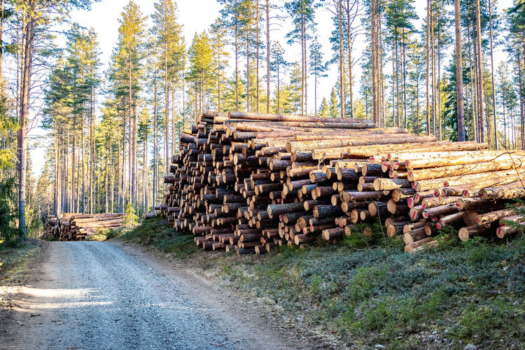Stack of logs on road amidst trees in forest