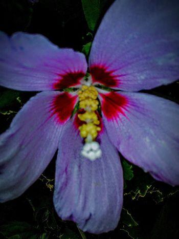 My Photography Eye4photography  Flowers Of EyeEm Flower Porn Nature Leaves🌿 Flower Photography Flowers,Plants & Garden Taking Photos ❤ Flower Pistil Green Leaves Flower Stamen