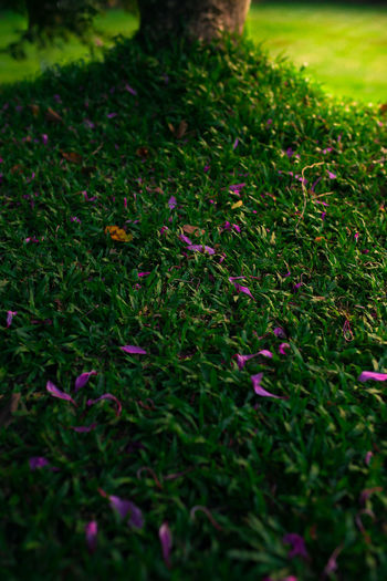 Tree shade. Beauty In Nature Close-up Day Field Flower Flowering Plant Grass Green Color Growth Land Leaf Nature Outdoors Plant Plant Part Selective Focus