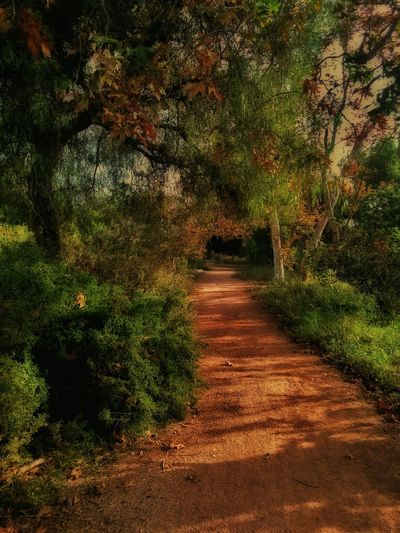 Just a Dirt Road Trail in Santiago Park in Santa Ana California . Processing in Snapseed I ramped up the color here to see what I would get, and it has a definite Storybook quality to it. City Park Orange County Storybookland Storybook Forest Illustrative Fantasy Look The Shire Golden Light Fantasy Edits Late Afternoon Light Dreamlike Dreamlight TreePorn Fantasyforest A Walk In The Woods The Woods Deep In The Woods Walking In The Woods