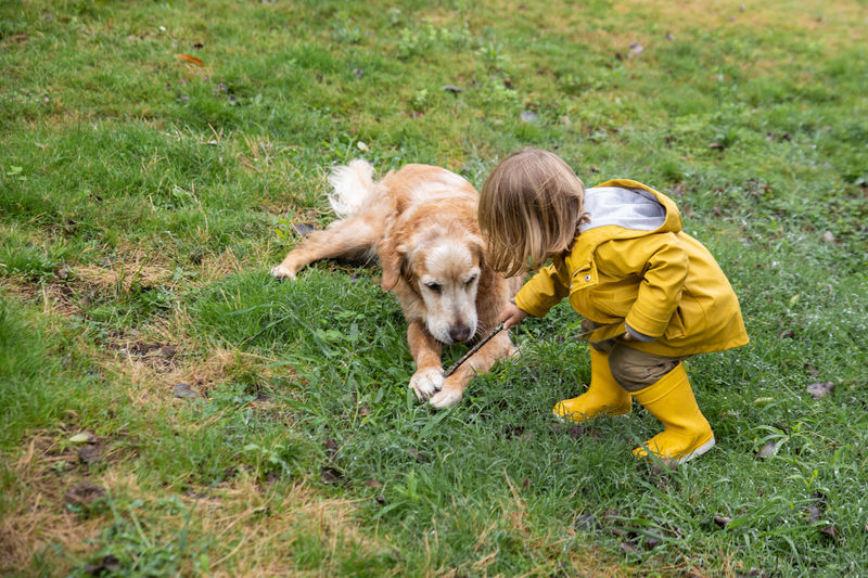 High angle view of golden retriever on grassy field