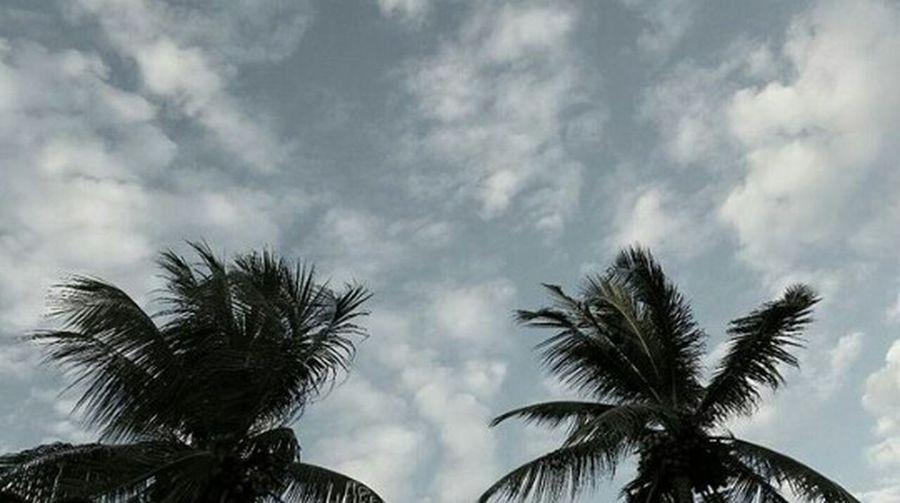 Um céu e dois coqueiros! First Eyeem Photo