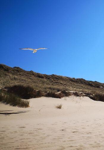 Sylt Möwe Bird