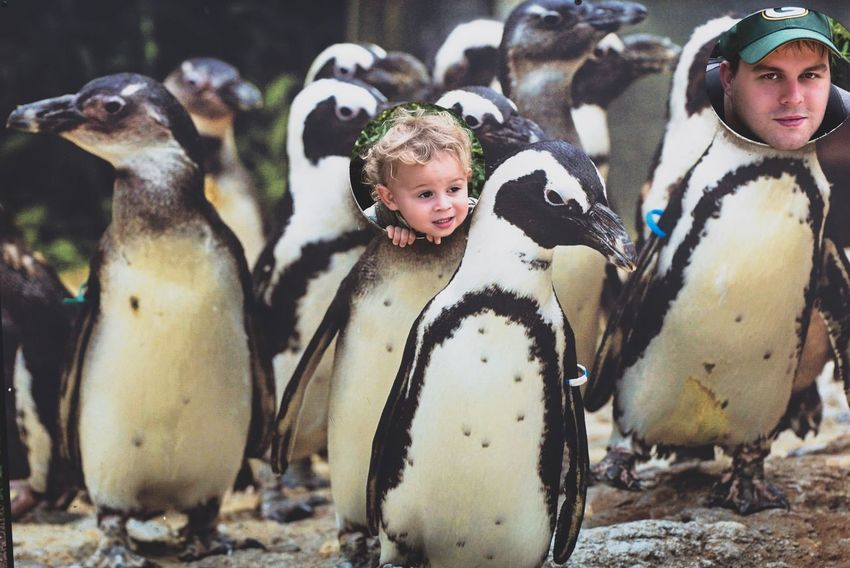 Family fun Family Time Zoo Animals  Childhood Representation Penguin Child Day Human Representation Female Likeness Bird Group Of Animals Cute Looking At Camera Portrait Front View Art And Craft