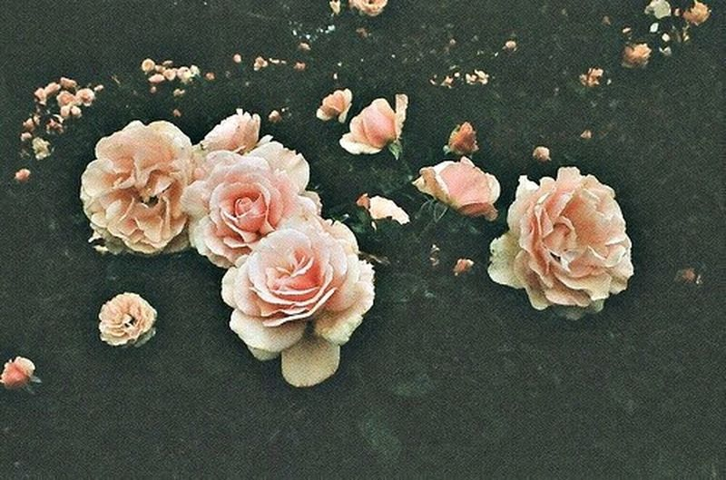 Love #pink #pretty Roses ?