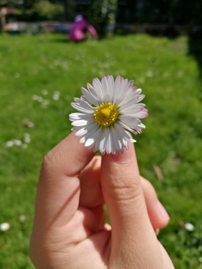 Daisy Flower Potrait Beautiful Cute Sunny GoodDay❤