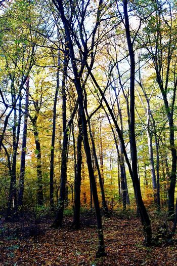 Tree Nature Outdoors Beauty In Nature Tranquility No People Autumn Tranquil Scene Day Nature Photography Atumn Colors Colorfull Trees Landscape Nature Tree Taking Pictures Colurfull