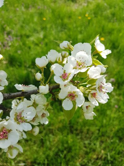 Наконец-то пришла Весна Flower Grass Day First Eyeem Photo