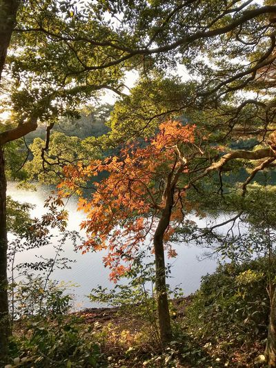 Beautiful ♥ Autmn☺ Day From My Point Of View Tree Nature Beauty In Nature Branch Tranquility Tranquil Scene Scenics Growth Outdoors Autumn No People Leaf Reflection Lake Landscape Travel Destinations Sky The Week On EyeEm Omura Nagasaki Japan