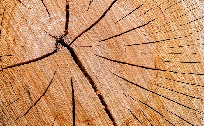 cross-section of a tree trunk showing annual age rings Tree Branches Tree Trunk Backgrounds Brown Close-up Cross Section Day Environmental Issues Full Frame Material Nature No People Outdoors Pattern Plant Rings Textured  Timber Tree Tree Ring Wood - Material Wood Grain Wood Section