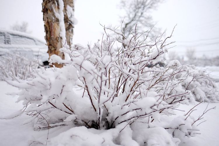 Snow stories