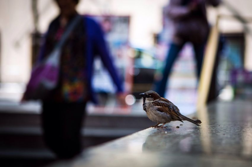 Ogni cosa mi parla di te Love New York City New York Getting Inspired Feel The Journey EyeEm Gallery EyeEm Best Shots EyeEm Eye4photography  New Beginnings Altro, Oltre Canon Mllml Playing With Thoughts Traveling Birds Bird Birds_collection
