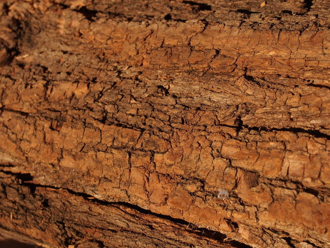 Backgrounds Full Frame Textured  Pattern No People Close-up Brown Geology Nature Cracked Rough Dirt Outdoors Rock Physical Geography Rock - Object Scenics - Nature Dry Mud Non-urban Scene Arid Climate Textured Effect