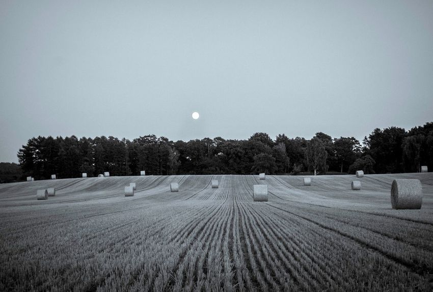 Moon over the field Blackandwhite Tree Landscape Plant Sky Land Tranquility Tranquil Scene Environment Field Nature No People Scenics - Nature Rural Scene Beauty In Nature Growth Agriculture Outdoors Moon Farm