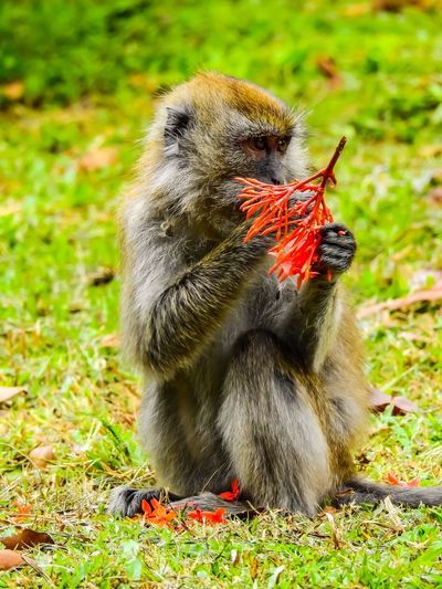Monkey with red