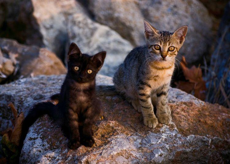 Stray Cat Stray