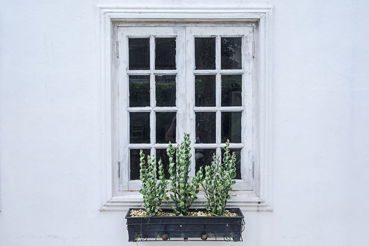 Architecture Building Exterior Built_Structure Close-up Day Flower Fragility Growth Nature No People Outdoors Plant Potted Plant Whitewashed Window Window Box Fresh On Market 2017