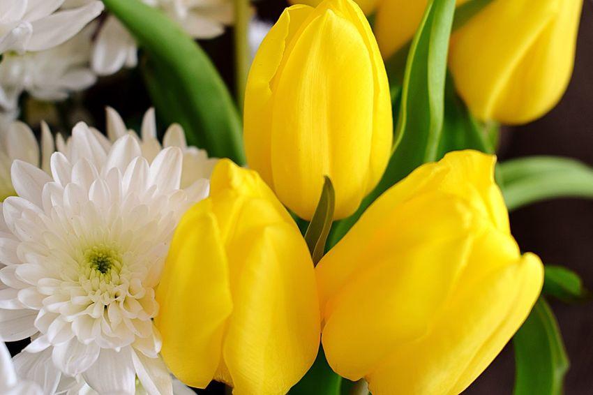 Tulips Flower First Eyeem Photo Yellow Flower Yellow Chrysanthemum White White Flower
