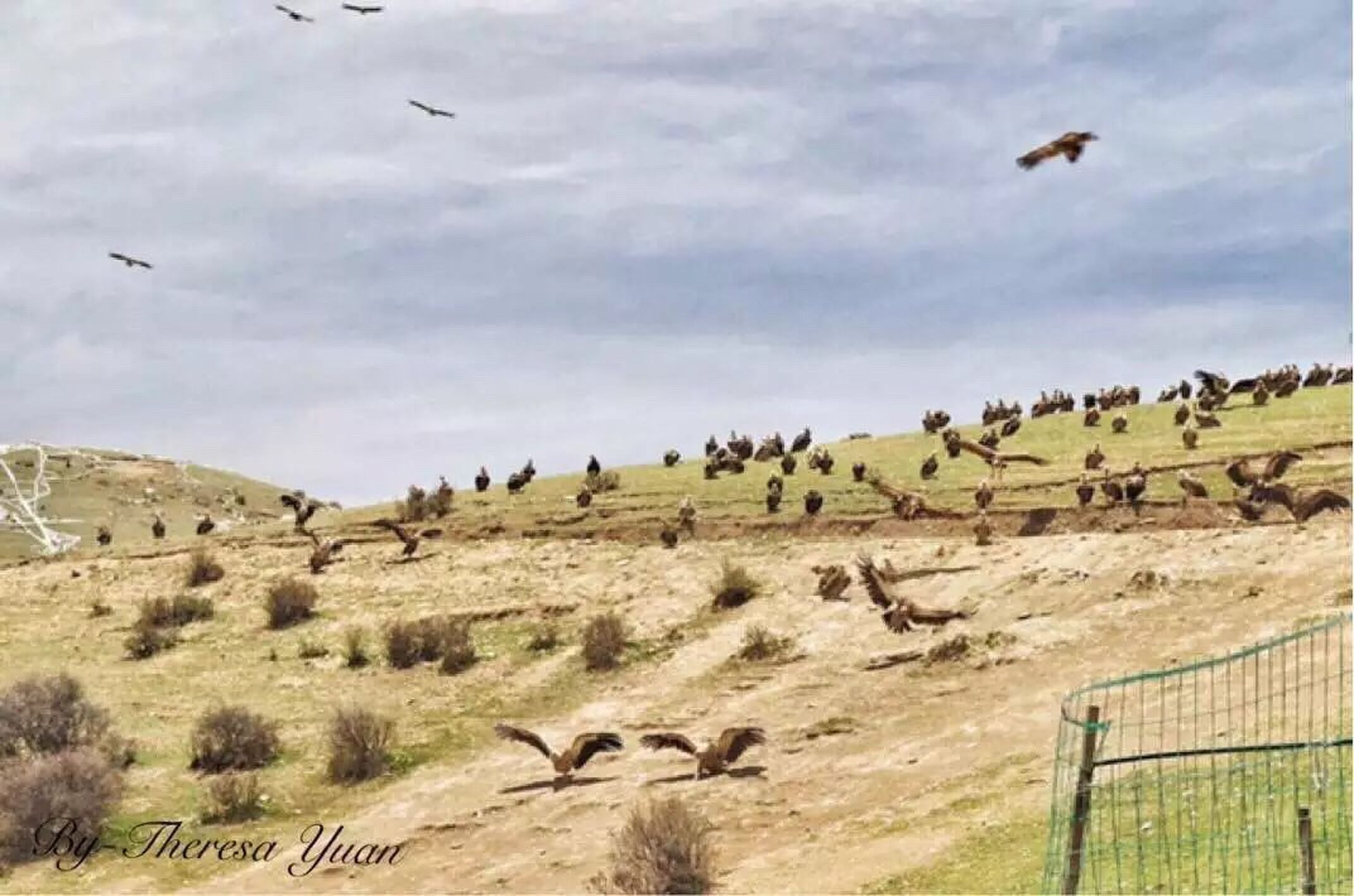 animal themes, landscape, animals in the wild, bird, wildlife, grass, tranquility, sky, nature, field, tranquil scene, flying, zoology, remote, scenics, beauty in nature, outdoors, non-urban scene, cloud - sky, solitude, countryside, no people, grassy, national park, horizon over land