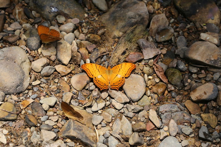High angle view of fallen leaves on rock