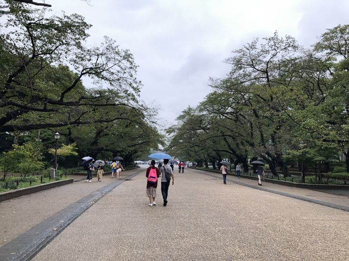 Strolling in Ueno Park Tree Real People The Way Forward Leisure Activity Diminishing Perspective Rainy Days Outdoors