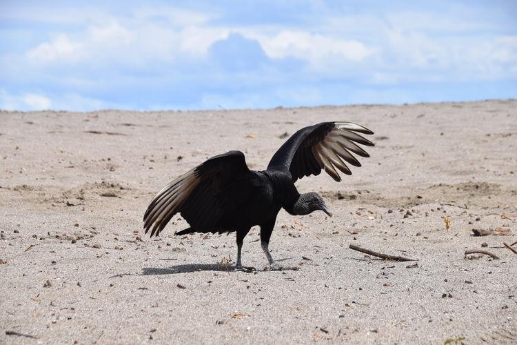 Bird on sand against sky