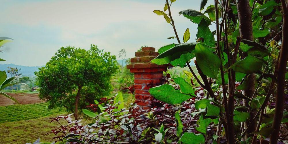Tree Leaf Flower Agriculture Sky Plant