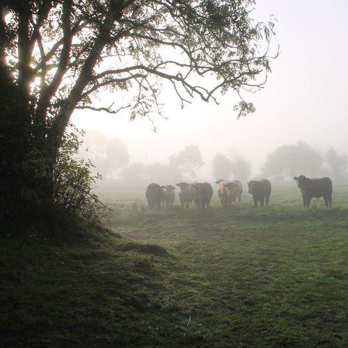 Misty morning in Carbury. EyeEm Nature Lover Tadaa Community Dawn Of A New Day EyeEm Best Shots - Landscape