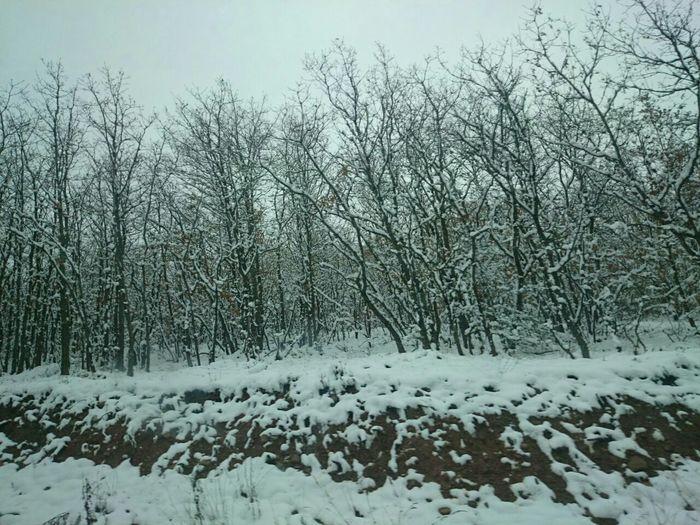 Un Bosque Nevado