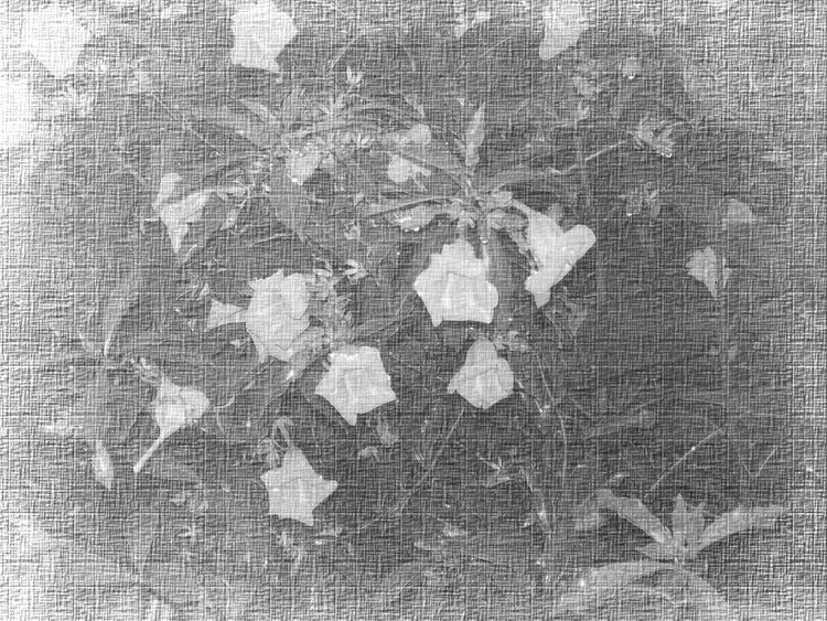 Abstract Backdrop Backgrounds Bloom Blossom Canvas Crumpled Flora Floral Flower Flower Head Flowers Framework Full Frame Leaf Leaves Nature Petal Struture Template Texture Textured  Textured Effect Vegetacion Wallpaper