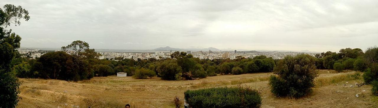 Vue Panoramique 360° Foret