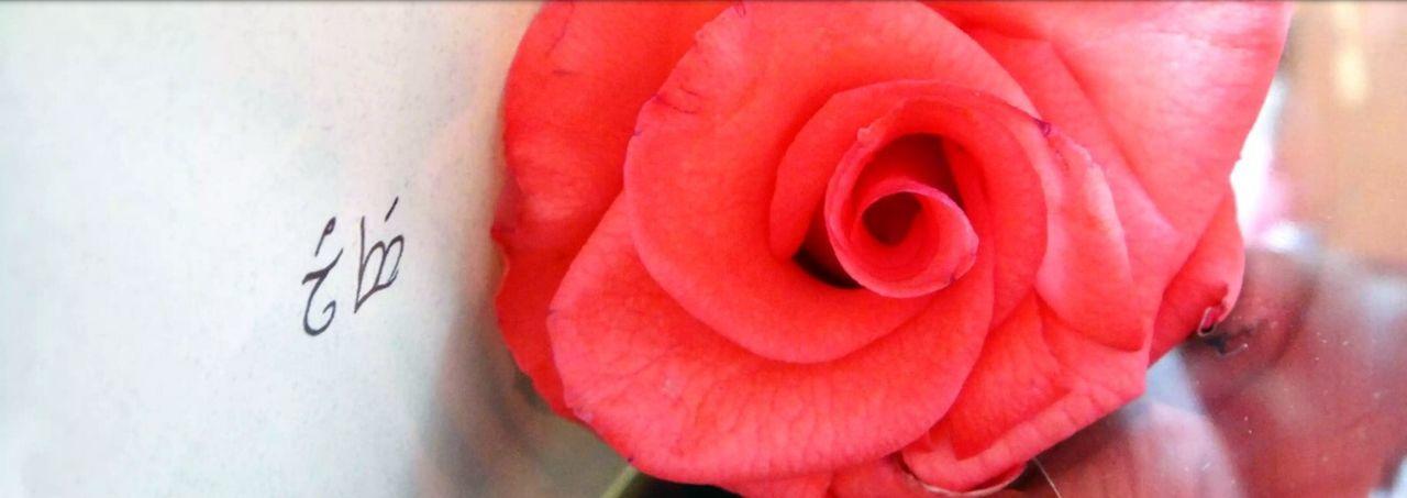 Sweet Elvish love 💓 Rose♥ Rose🌹 Milkfist Love Elvish