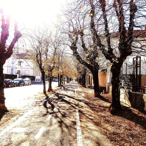 Nature Tree Day